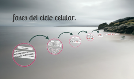 fases del ciclo celular.