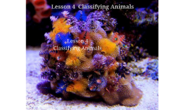 Lesson 4  Classifying Animals