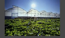 The Greenhouse Effect Presentation