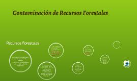 Contaminación de Recursos Forestales