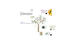 Copy of 식물