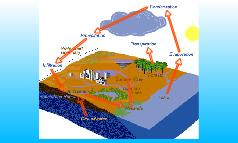Wetlands Water Cycle