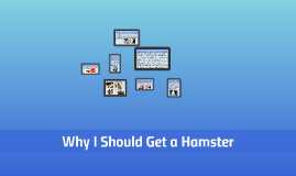 Why I Should Get a Hampster