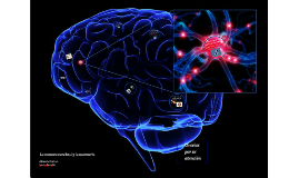 La corteza cerebral y la memoria