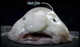 blub fish by delaney strzyz on prezi