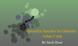 Invasive Species in Ontario: Asian Carp