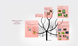Augalu klasifikavimo lygmenys
