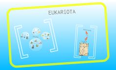 Eukariota