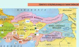 TÜRKİYE'E YETİŞTİRİLEN BAŞLICA TARIM ÜRÜNLERİ