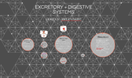 Copy of EXCRETORY + DIGESTIVE SYSTEMS