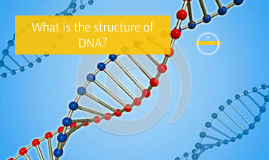 BIO_What is the structure of DNA?