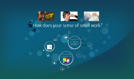 How does your sense of smell work?