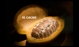 Copy of EL CACAO
