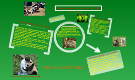 Copy of I-Search Project- Animal Poaching