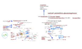 Bioquímica-Gluconeogénesis-UNMSM
