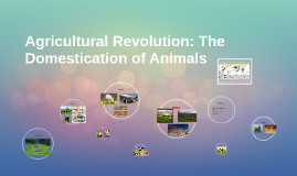 Agricultural Revolution: The Domestication of Animals