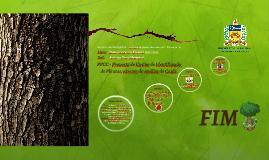 http://arvoresdeportugal.free.fr/IndexArborium/Carvalho_negr