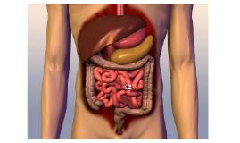 The small intestine