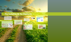 Copy of       The Evolution Of The Elephants