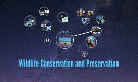 Wildlife Conservation and Preservation