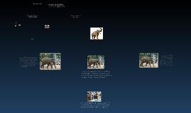Copy of Stephen's Zoo