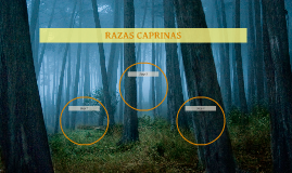 RAZAS CAPRINAS