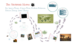 Copy of Savanna Biome