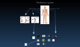 Nervous System Concept Map