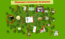 Copy of Нервная система человека