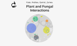 Plant and Fungal Interactions