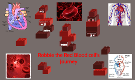 Robbie the Red Blood cell's Journey
