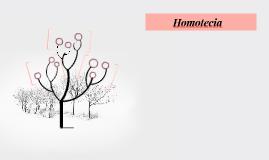 Homotesia