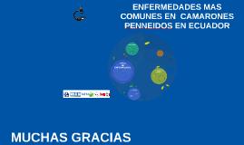 ENFERMEDADES MAS COMUNES EN  CAMARONES PENNEIDOS EN ECUADOR