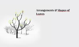 Arrangements & Shapes of Leaves