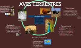 Copy of AVES TERRESTRES