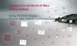 Copy of Esquemas de la reproducción de Marx, simple y ampliada