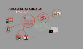 Copy of Copy of PLIKASĖKLIAI AUGALAI