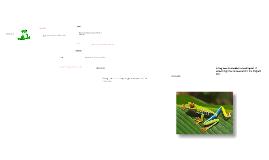 Frog Anatomy 2