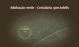 Adubos verdes - Crotalária-spectabilis