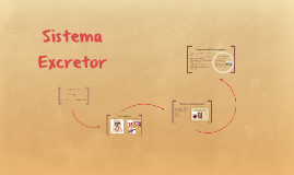 Copy of Sistema Excretor
