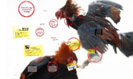Enfoque crítico al análisis de la riña de gallos en Bali