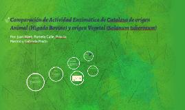Comparación de Actividad Enzimática de Catalasa de origen An