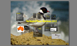 Scientific Research - Hooded Plover