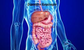 Cópia de Digestão