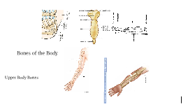 Copy of Bones of the Body