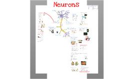 AP Bio- Physiology 7: Neurons