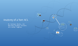 Anatomy of a Torn ACL
