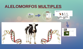 ALELOMORFOS MULTIPLES