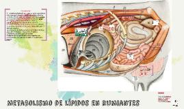 Metabolismo de lípidos en rumiantes