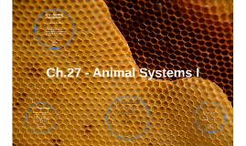 Copy of Ch.27 - Animal Systems I